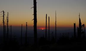 Západ Slunce do pahýlů