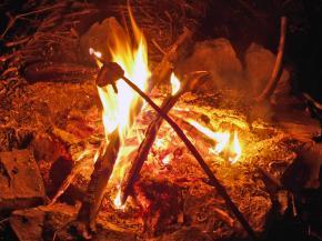 Bedla ohňová vonná