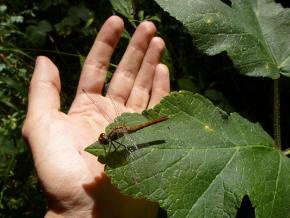 Šídlo na dlaní