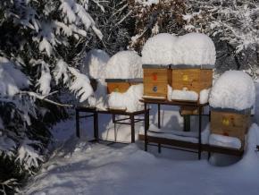 Mrazící boxy na včely