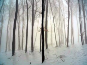 Ticho zimního lesa